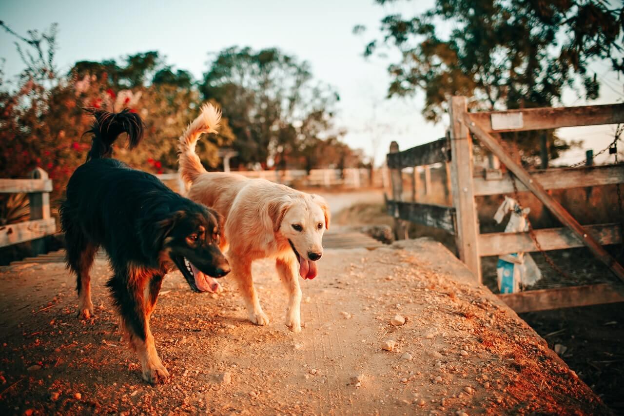 Mokra karma dla psa, kiedy warto się zdecydować?